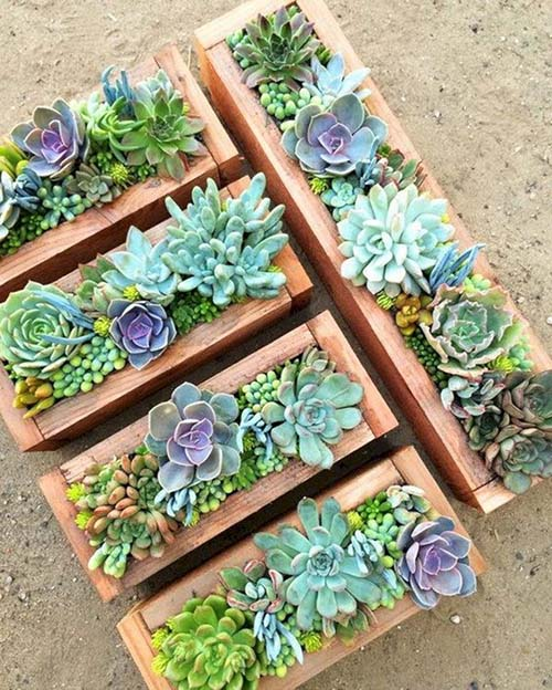 centerpiece-small-gift-colorful-succulent