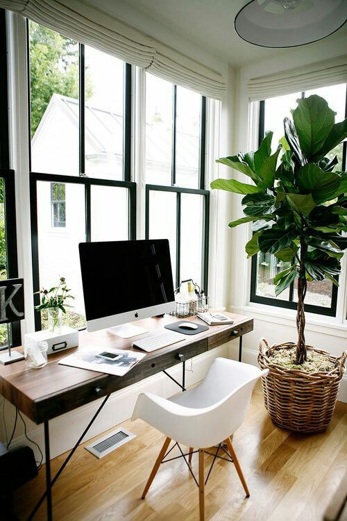 home-office-productive-work-space-green-indoor-plant